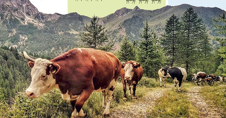 La Transumanza > Progetto di Italia, Grecia e Austria per promuovere l'antica tradizione dei pastori